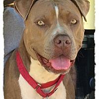 Adopt A Pet :: Keira - La Habra, CA