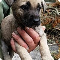 Adopt A Pet :: Cristina - Gainesville, FL