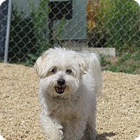Adopt A Pet :: Benjamin - Meridian, ID