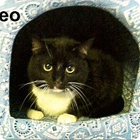 Adopt A Pet :: Oreo - Medway, MA