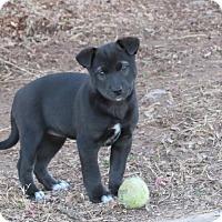Adopt A Pet :: Madi - Broken Arrow, OK