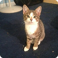 Adopt A Pet :: Rudolph - Trevose, PA