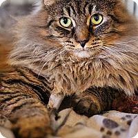 Adopt A Pet :: Skye - Markham, ON