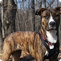 Adopt A Pet :: Diamond - New Castle, PA