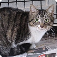 Adopt A Pet :: MJ - Harrisburg, NC