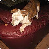 Adopt A Pet :: Maxine - Buchanan Dam, TX