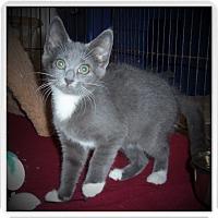 Adopt A Pet :: ENZO - Medford, WI