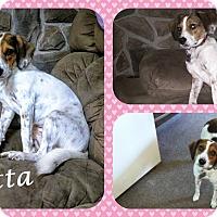 Adopt A Pet :: Rosetta - DOVER, OH