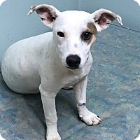 Adopt A Pet :: Mindy - St. Catharines, ON