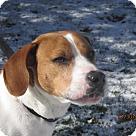 Adopt A Pet :: Barney