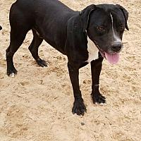 Adopt A Pet :: Medina - San Antonio, TX
