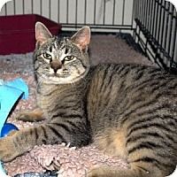 Adopt A Pet :: Niles - Colorado Springs, CO