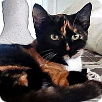 Adopt A Pet :: Phoebe - Seminole, FL