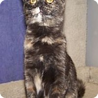 Adopt A Pet :: Gabby - Colorado Springs, CO