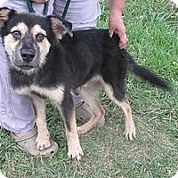 Adopt A Pet :: BO - Glastonbury, CT