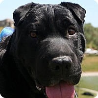 Adopt A Pet :: Vader - Scottsdale, AZ