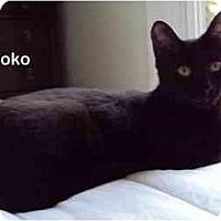 Adopt A Pet :: Yoko - Portland, OR