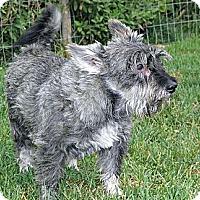 Adopt A Pet :: Angus - Evans, CO