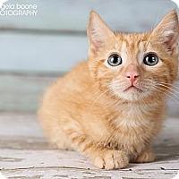 Adopt A Pet :: Ace - Eagan, MN