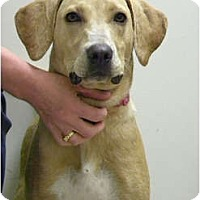 Adopt A Pet :: PIPPI - Hagerstown, MD