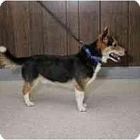 Adopt A Pet :: Russell - Inola, OK