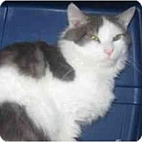 Adopt A Pet :: Solamann - Clay, NY