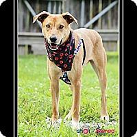 Adopt A Pet :: Stumpy - Delaware, OH