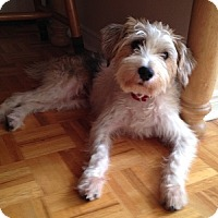 Adopt A Pet :: Joby - Hamilton, ON