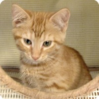 Adopt A Pet :: RAMONDO - Acme, PA