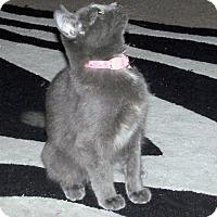 Adopt A Pet :: Antonia - The Colony, TX