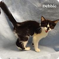 Adopt A Pet :: Little Debbie - Bentonville, AR