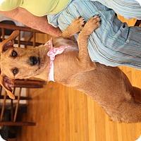 Adopt A Pet :: Sandy - Homewood, AL