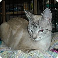 Adopt A Pet :: Zuri -Foster Home Needed - Arlington, VA