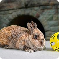 Adopt A Pet :: Shella - Marietta, GA