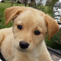 Adopt A Pet :: Tex - Preston, CT