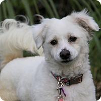 Adopt A Pet :: JENNIFER - Newport Beach, CA