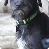 Adopt A Pet :: Frack - Woonsocket, RI