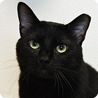 Adopt A Pet :: Toliver (Foster - NO FEE) - Nashville, IN