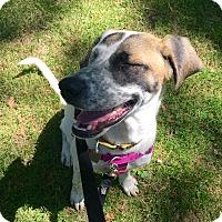 Adopt A Pet :: Karma Chameleon - Jersey City, NJ