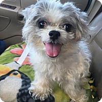 Adopt A Pet :: Astro - Mooresville, NC