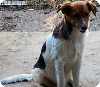 Border Collie Mix Dog for adoption in Longview, Washington - BLAKE