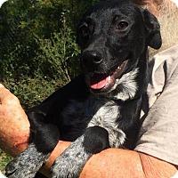 Adopt A Pet :: Domino - Slidell, LA