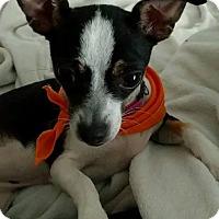 Adopt A Pet :: Dallas-Adopt Me! - Victorville, CA
