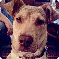 Adopt A Pet :: Nala - Providence, RI