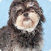 Adopt A Pet :: Puffinator - Encinitas, CA