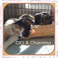 Adopt A Pet :: Channing - Atco, NJ