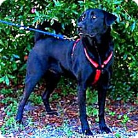 Adopt A Pet :: Gallagher aka Gally - Graceville, FL