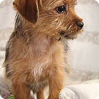 Adopt A Pet :: Bernie - Marietta, GA