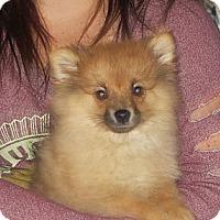 Adopt A Pet :: Emmett - Greenville, RI