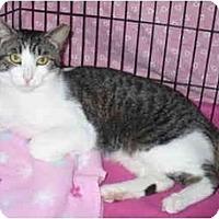 Adopt A Pet :: Bender - Colmar, PA